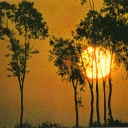 Sunset with eucalyptus trees