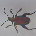 Cărăbușul-broască (Sagra cf. femorata)