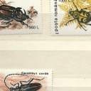 Insecte Uzuale II